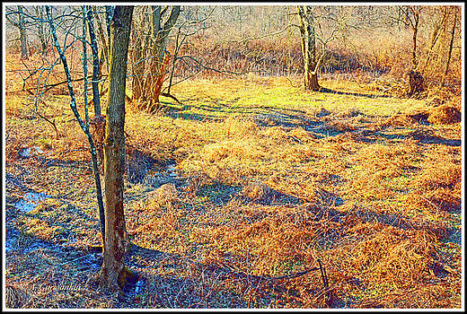 Deciduous Forest Ecosytem Floor in Late Winter by A Gurmankin