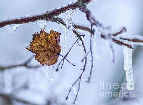 Deep Freeze by Nick Boren