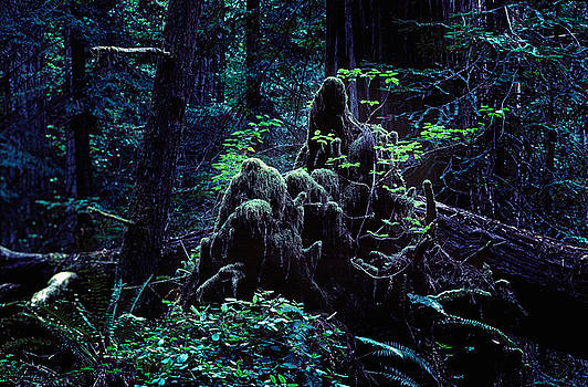 Daniel Furon - Deep in the Redwoods Grove