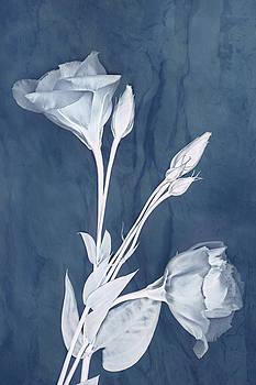 Deep Within in Slate by Leda Robertson