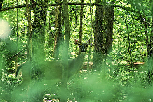 Deer Deep In The Woods by Rick Friedle