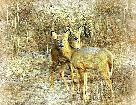 Deer Duo 6 by Marty Koch