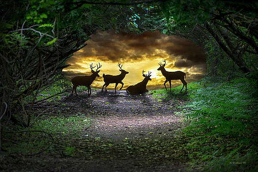 Deer Fantasy by Brian Wallace