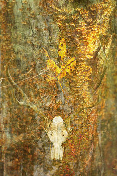 Deer Skull And Tree Bark Fungi by Suzanne Powers