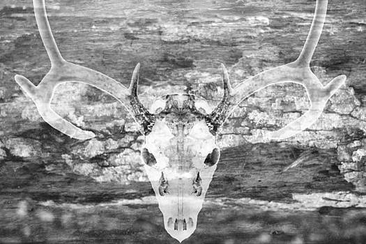 Deer Skull On Rustic Wood Black And White Photography by Suzanne Powers