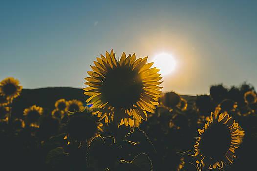 Definition of Summer by Cesare Bargiggia
