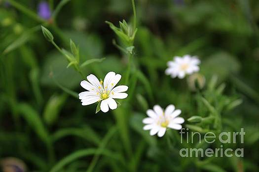 Delicate Beauty by Vicki Spindler
