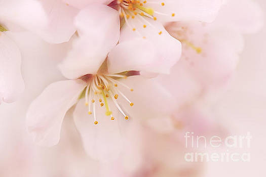 LHJB Photography - Delicate Cherry Blossom