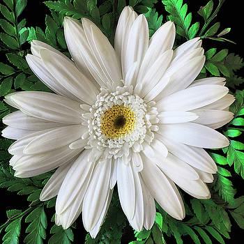 Delicate White Flower by Andrew Soundarajan