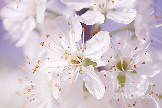 LHJB Photography - Delicate white....