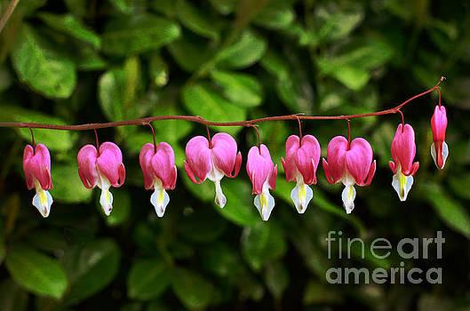 Delightful Bleeding Hearts Flowers by Maria Janicki