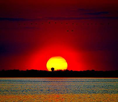 Delmarva May Sunset by William Bartholomew