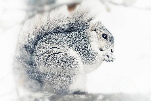 Michael McStamp - Delmarva Peninsula Fox Squirrel II
