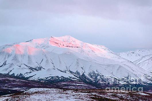 Denali - Alpenglow 2 by Mary Carol Story