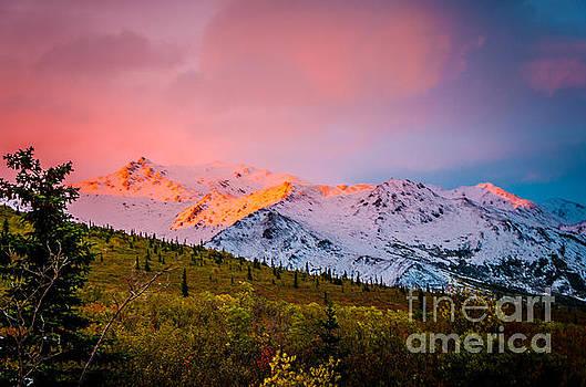 Denali - Alpenglow 4 by Mary Carol Story