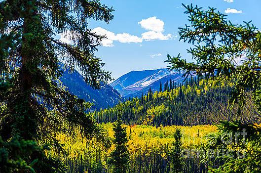 Denali - Golden Valley 2 by Mary Carol Story