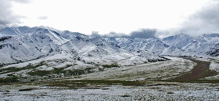 Denali Mountains by Preston Zeller