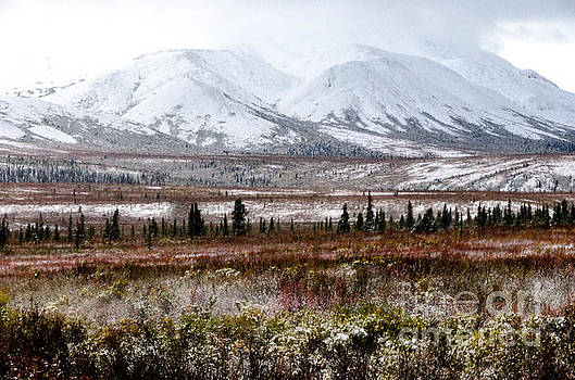 Denali - Winter Came Early 2 by Mary Carol Story