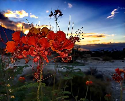 Desert Bird of Paradise by Chris Tarpening