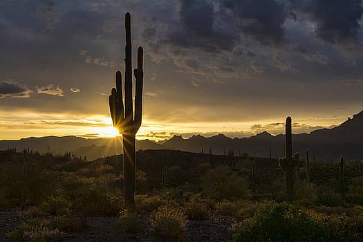 Saija Lehtonen - Desert Dawn on the Horizon