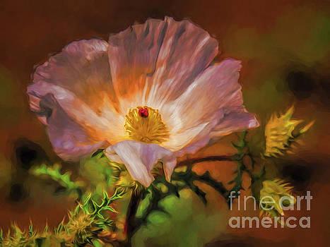 Desert Flower  ... by Chuck Caramella