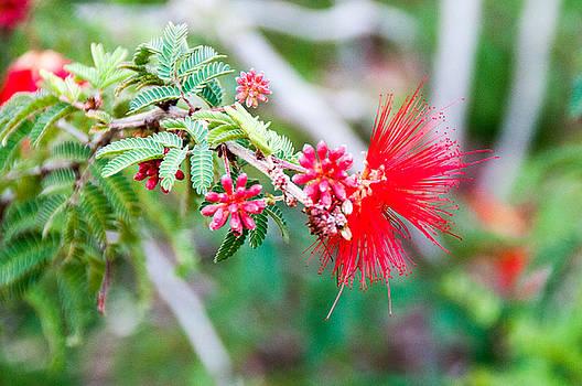 Desert Flower by Leesa Toliver