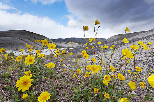 Desert Gold in Death Valley by Dung Ma