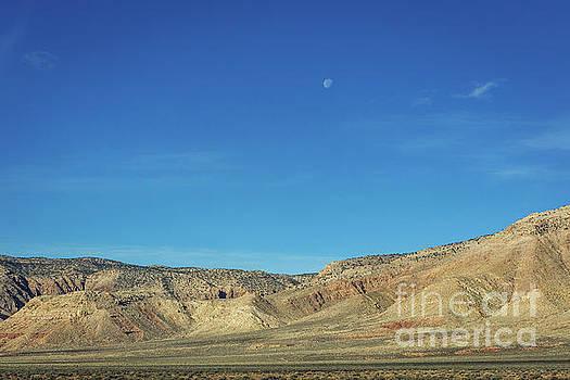 Desert Moon by Joan McCool