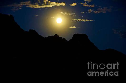 Desert Moonlight  by Kelly Wade