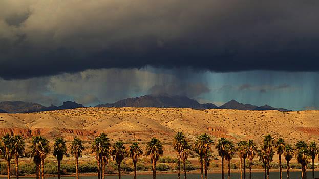 Desert Rain by Sue Houston
