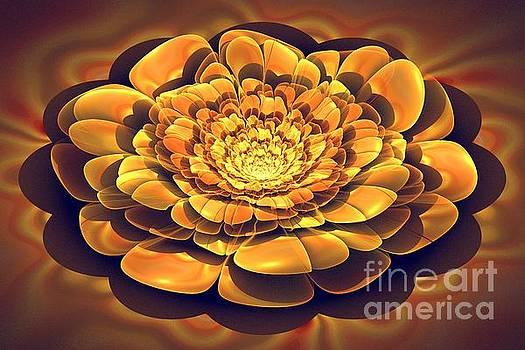 Desert Rose by Amelia Macioszek