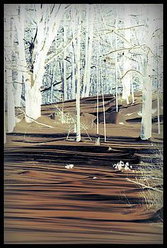 Desert by Sarah Hamlin