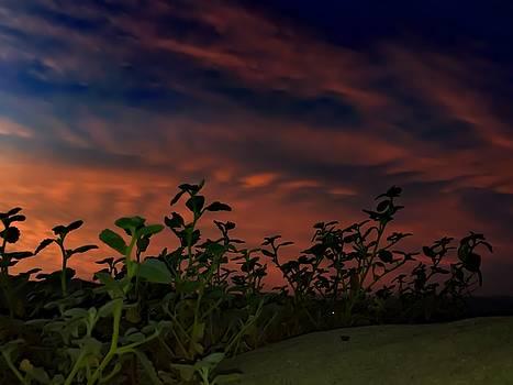 Desert Sunset by Chris Tarpening