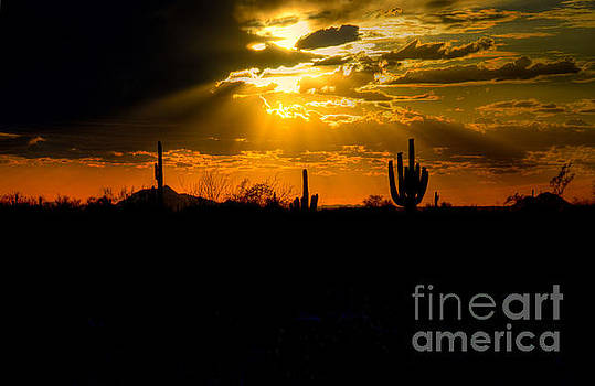 Desert Sunset by Kelly Wade