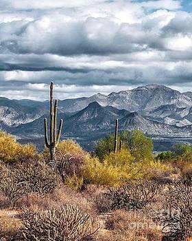 Desert Vista by Pamela Shearer