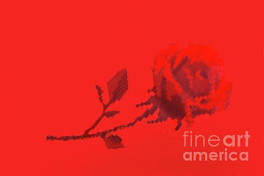 Designer Red Rose by Linda Phelps