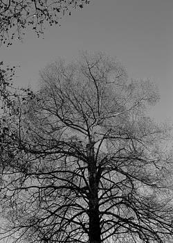 Desnudez en invierno by Maria Jose Llanos