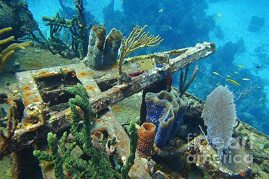 John Malone - Detail of Shipwreck Encrusted with Beautiful Variety of Coral