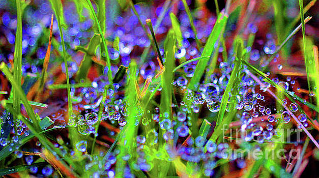 Dew Dance Abstract by Karen Adams