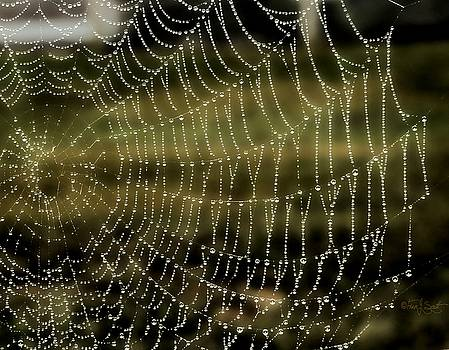 Dew Drop Spider Web by Fran J Scott