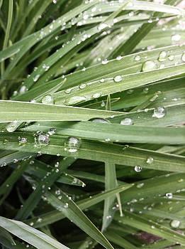 Dew Drops by Kyle Ferguson