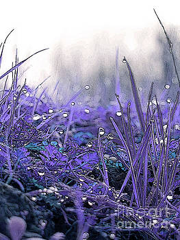 Dew Drops Magic Two by Robert Ball