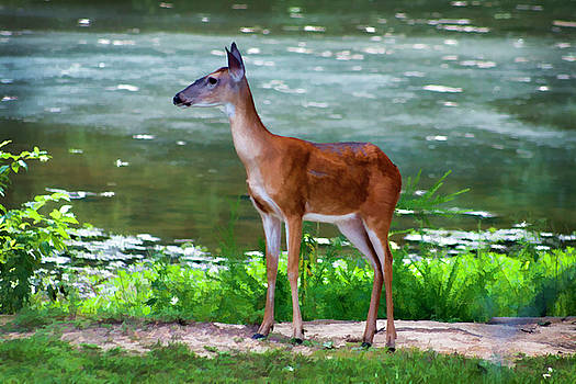 Digital Art Alabama Whitetail Deer  by Kathy Clark