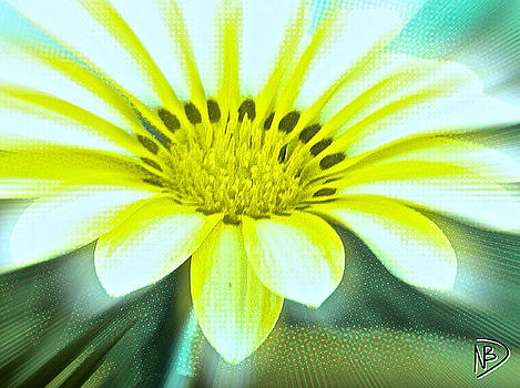 Digital Daisy by Nicole Dumond-Barry