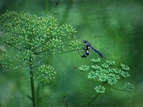 Dill Bug by Sheryl Bergman