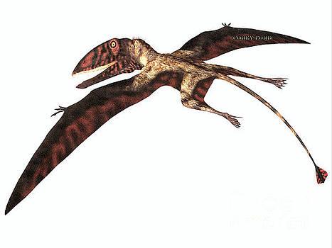 Corey Ford - Dimorphodon on White