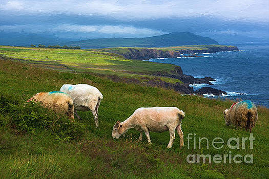 Dingle Ireland by Andrew Michael