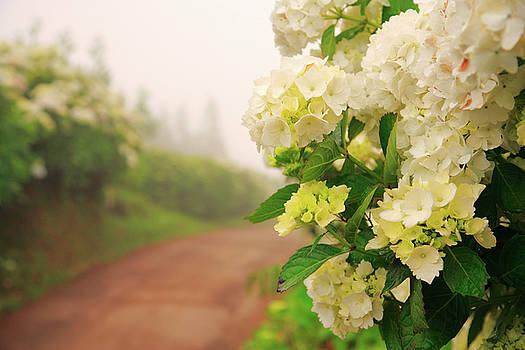 Gaspar Avila - Dirt road with hydrangeas