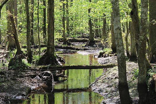 Dismal Swamp, Virginia by Vikki Angel