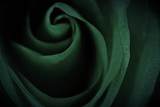 Divine Emerald Rose by The Art Of Marilyn Ridoutt-Greene